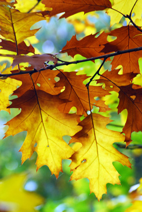 autumn 006